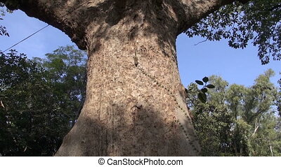 big tree with indian palm squirrel in India