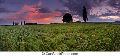 Sunset over farm field in wind