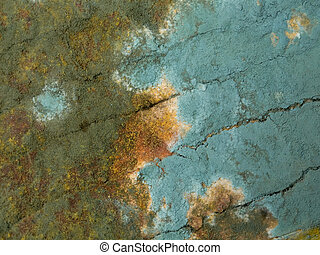 mold closeup