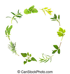 Herb Leaf Circle - Herb Leaf circle of lemon balm, golden...