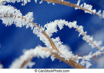 hoarfrost - Dry plant covered with hoarfrost