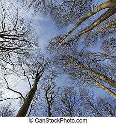 Treetops in winter against blue sky