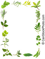 Herb Leaf Beauty - Herb leaf selection forming a frame over...