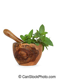 Chocolate Mint Herb Leaves