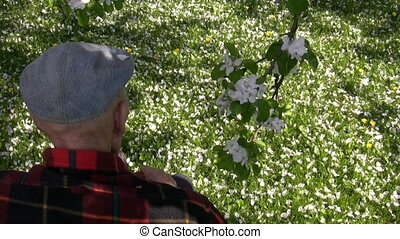 Very old man in a blooming garden - Very old man sitting on...