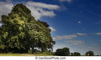 large trees and cloud timelapse in hampstead heath, london