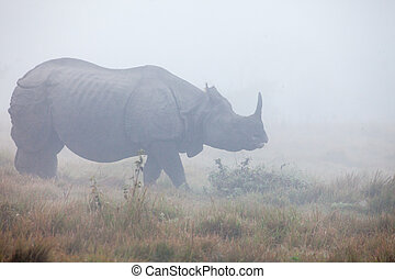 Indian one horned rhinoceros at Royal Chitwan national park...