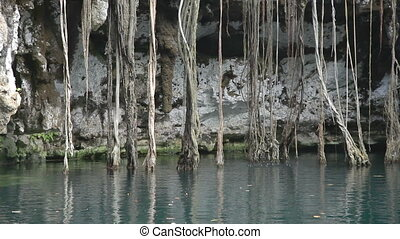 a cenote in mexico. these sinkholes are one of the natural...