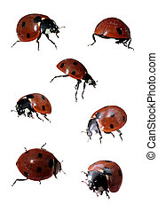 set of ladybirds - set of ladybirds in different angles on a...