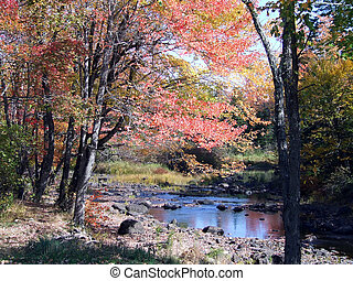 Maine Countryside pond in fall