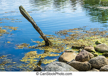 Wooden pole in the water at the island Tjärö in Blekinge...