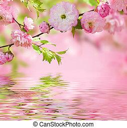 Pink flower of an Oriental cherry in a spring garden, water