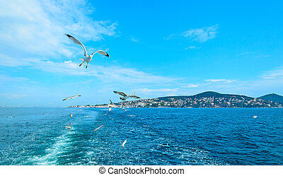 The Seagull on the island of Buyukada - The Seagull on the...