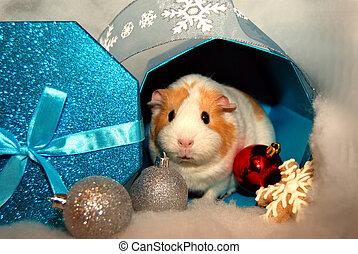 Guinea Pig Christmas