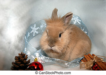 Holiday Bunny Rabbit
