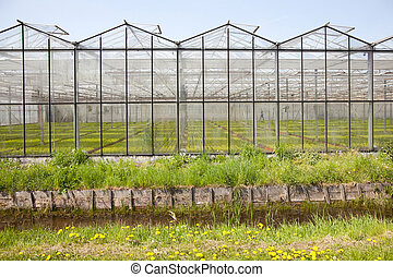 greenhouse in Westland in The Netherlands near the Hague in...