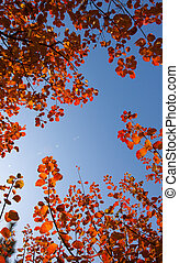 Red leaves in the autumn blue sky