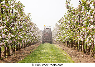 treating blossoming apple treas by spraying - treating...