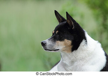 Mixed breed dog.