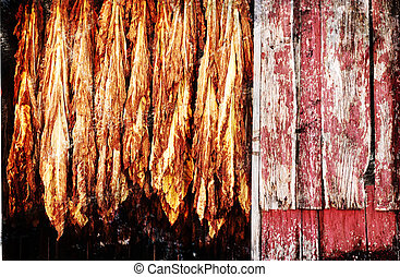 tobacco drying - A grunge illustration of tobacco hanging...