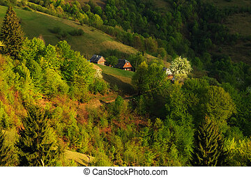Farmhouse with a blossoming tree in the Carpathian Mountains...