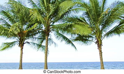 three palms in wind at the beach