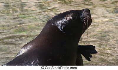 a sea lion in the sea