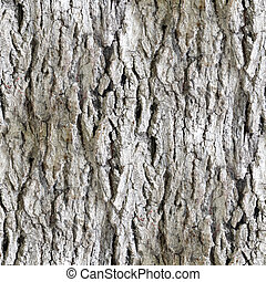 seamless texture white tree bark wallpaper background