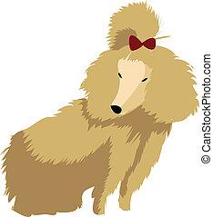 A poodle