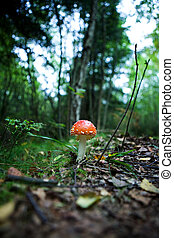 Magic Mushroom - A magic mushroom in the forest - fly...