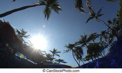 a camera placed underwater in a swimming pool, filming the sky and palm trees. the water makes an unusual effect