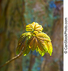 detail of leaf in forest