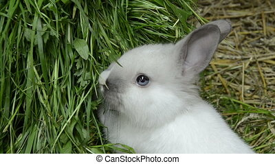 baby rabbit with blue eyes looking astounded