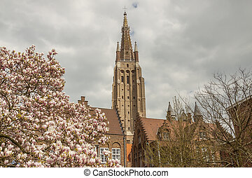 Blossom tree in background Our Lady Church - Brugge, Belgium...