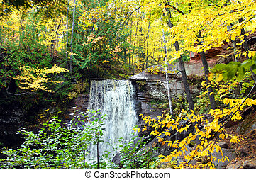 Autumn on the Upper Peninsula - Yellow and gold Autumn...