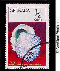 GRENADA - CIRCA 1978: A Stamp printed in GRENADA, hardwood...