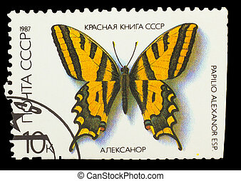 "USSR - CIRCA 1987: A stamp printed in USSR, shows Butterfly Papilio alexanor , from series ""Red Book USSR"", circa 1987"