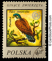 POLSKA - CIRCA 1975 : A Stamp printed in POLAND, shows image...