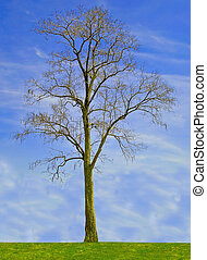 One tree on blue sky background