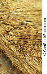 Yellow fox fur texture macro