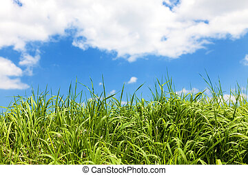 Grass over blue sky