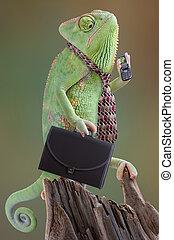 camaleón, hombre de negocios