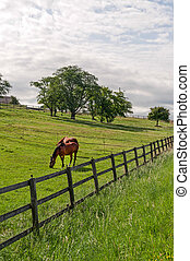 Vaud Switzerland - Horses at pasture in a summer morning