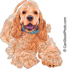 cute sporting dog breed American Cocker Spaniel - close-up...