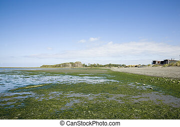 Cline Spit Beach - Low tide at Cline Spit Beach in Sequim,...