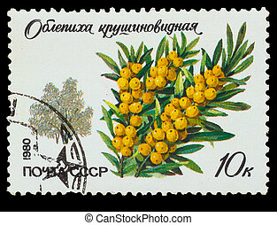 USSR - CIRCA 1980: A stamp printed in USSR, shows...