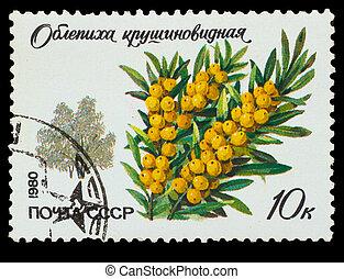 USSR - CIRCA 1980: A stamp printed in USSR, shows Hippóphaë...