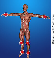 cuerpo, inflamación, humano