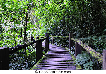 Wood bridge - wood bridge for people to walk into the forest