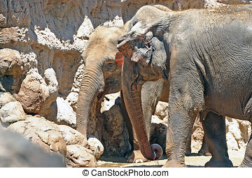 The Stand Off - Two elephants stand in a face to face moment